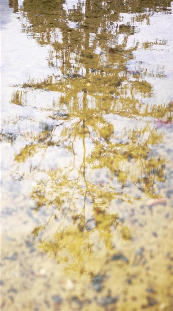 casadeco casadeco caselio caselio coleccin atelier papel para pared papel pintado
